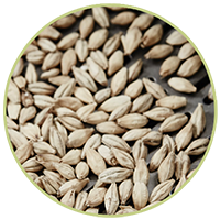 Photo of malt to click through to our malt pages